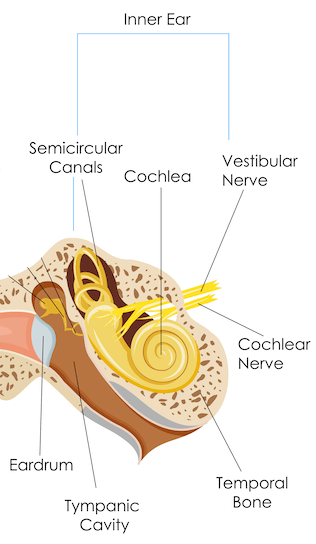 Inner ear anatomy diagram